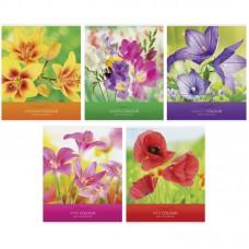 Тетрадь 48л клетка Цветы. Яркие цветы
